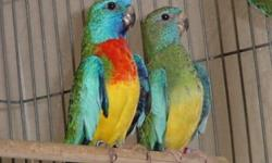 I have many parakeets to rehome. Im asking a rehome fee of $12 each or $20 for each pair I have all colors