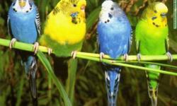 yellow, blue, white, green