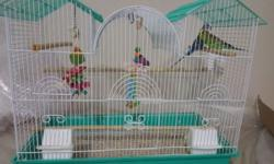 I have 3 pairs lovebirds and 2 pairs parakeets need a good home Im located in Nashville, More info and pictures. Call or text 6158775511