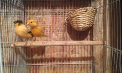 """These are used but in good shape. All have external feeding stations for safety and ease of use and all are up on metal legs for easy cleaning. Quantity and information for each cage below. 3'x3'x2': 3 Available, 1""""x1"""" wire, great for large conures,"""