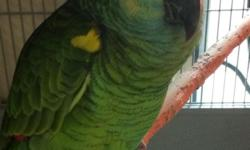 Come and see our large selection of Tame Parrot's that we have at : Arrieros Pet Shop 9531 Jamacha Blvd. SpringValley, Ca 91977 or call 619-434-3207