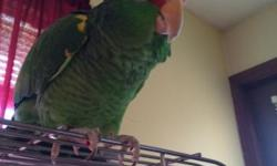 Bird for sale and Cage Hi speek.for inf.413 364-4260