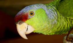 Umbrella cookatoo-gone Amazon with red on his head male with large cage toys and all his things. says hello pretty bird. Lets you touch his head. $500.00 price is frim. A waiting pick up -Blue and gold macaw female is friendly once she gets to know you,