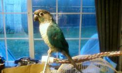 peach front conure 3 years old.$200 cach only no texts or emais call at (209)969-7652 thank you