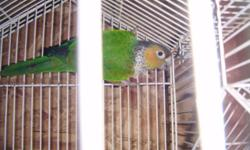 Beautiful female peach front conure need to rehome asking $150 if interested please call or text 619-376-7318