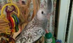 Sweet baby is ready to go. Appears to be a male and just weaned out ready to bond with it's new family Many sales and a few rescued. http://www.roxannesbirds.webs.com/ I have many colors and ages. Several great deals going on. Please call me. Most prices