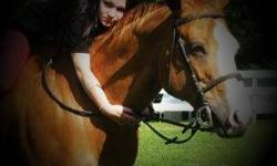Please help, I'm looking for a new horse as I recently just lost my best friend of 15 years! Its been about 2 years now and I think its time to find a new best friend, I miss my girl like crazy and would give anything to have her back, But I know I