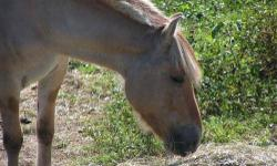 Pony - Epona - Small - Adult - Female - Horse Epona When she arrived at BSER's door, Epona was a very sad and sick pony. She had respiratory and lymphatic infections, worms, rain rot, multiple wounds, and never-been-trimmed hooves. BSER worked diligently