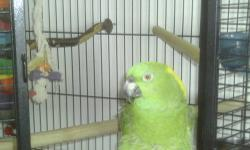 aviary Amazon Parrot . all paper work Dna test and vet history. comes with travel cage , talk and whistle all day , really good with kidz . step up and tricks on the floor .
