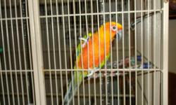 female sun conure is trying to talk