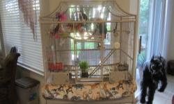 Those Birds are very colorful,they are two and three years old, and they come with a nice cage, if interested call # 916 612 1398