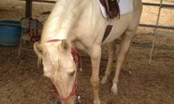 Pretty qh mare for lease. she will only be suitable to intermediate or better rider or someone in lessons. would make an experienced teen a nice show pony. 15.2 hands can be ridden english or western. trail or show. all tack is supplied. If you have your