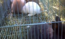 we have a lot of rabbits to sell we have rabbits from 2 -4 months old / se habla espanol. we only have 5 rabbits left JANUARY 24, 2013 THANK YOU