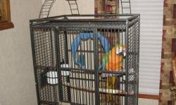hi this is a nice parrot he is all green but his head it is yellow he is about 8 years old he talks and enjoy people very friendly firm price of 400 the bird and his cage must sell do to my mom sick and we selling to a good home please email or call