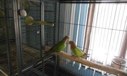I have a pair of princess of wales. Very quiet beautiful birds Update. Yes they are both males . Very quiet , beautiful birds