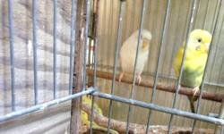 I have proven parakeet pairs for sale for 40.00 each pair. Also selling the double breeding cages with nest box for 30.00 each. The cage can be one big one or two smaller ones and the nest boxes will be included. some pairs have babies at the moment which