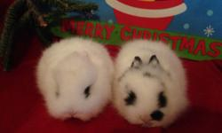 Purebred broken black Lionhead bunnies have one male & one female available $125. 760-473-2442 This ad was posted with the eBay Classifieds mobile app.