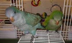 Almost weaned and ready for new loving homes. $325 green $375 blue This ad was posted with the eBay Classifieds mobile app.