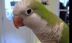 This little fellow is Alex, he is about a year. I am selling him because I have gotten a parrot and they dont like each other. He is very playful and makes lots of different sounds. Once he gets to know you will listen to the varies sounds. He does talk a