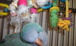 i have a four year olde female blue quaker parott and a four year olde male green quaker parott and ther calif king cage for $500.00 firm in rolling prairie IN 46371 obro or trade for reptiles