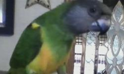 I have a male Quaker hes Green DNA tested male Hatch date 8/6/2012 His name is Rio. he is cage aggressive and seems to prefer males. I have two small daughters and I am scare they are gonna get bit. So I am looking for a new home. Price is negotiable for