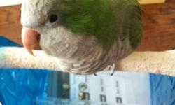 I am selling this quaker parrot. His name is Manny and he is 7 years old. He screams a lot during the day and talks a lot. He bites everyone except for me as he is very attached to me so he may or may not bite you. He knows a lot of words: -Hi Manny -How