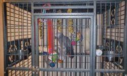 Pender is her name. She is 3-1/2 yrs and talks alot once you get to know her. She can say pickaboo to pretty bird. She comes with her cage. She is a very funny bird once you get to meet her. She also takes her own showers when you put a bowl of warm