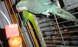 HI, I have quaker parrot that are not tame, but young enough( 1-2 yr. old) that can be trained. These intelligent birds can easily adapt to a new enviroment and you can teach to talk. If you are interested you call/ text me 972-2014330. please bring your
