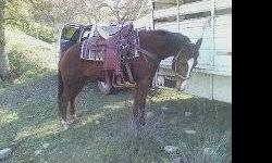 This mare is about 14.2 hands and stocky. She is very athletic and has been used in the hills checking cows. She does great in the hills but is also super athletic and can spin a roll back in a hurry. She could go in any direction. She is spirited but