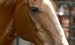 Quarterhorse - Firebug - Medium - Senior - Male - Horse 'I've worked hard all of my life. Could I just be your friend now?' Firebug has always earned his keep. He was a great working ranch horse. But when he started stumbling and falling, it was time for