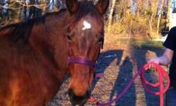 Quarterhorse - Ford Dancer - Large - Adult - Female - Horse This pretty girl was part of a cruelty case from July, finally as of 12/19, the case is finally settled, and this wonderful girl is now available and looking for her forever loving home. She has