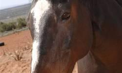 Quarterhorse - Wink - Medium - Senior - Female - Horse You have to be one tough cookie to be hit by a truck and just keep on going. That's what Wink did years ago when she got out of her pasture and went for a jaunt down the highway. Her left hind fetlock