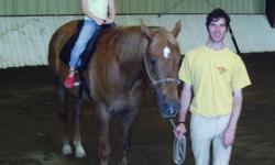 Quarterhorse - Zippy! Companion Horse Only - Large - Adult Please Note: Zippy's proceedes are being donated but he will remain with his owner until a new home is found. Zippy is a 15 year old Sorrel Gelding,15.3 hhs. He is AQHA registered. no true vices.