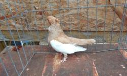 Iam a breeder of exotic and rare hard to find game birds,doves and pigeons plus I also breed a select group of hookbills ..(sorry no parrotlets)..I do ship to the lower 48 via USPS and if absolutely necessary via airlines. Please visit my site