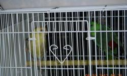 I have a pair of red rump parakeet for sale.I'm asking $140 if you interest call or tex 774-245-9542