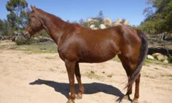Beautiful/Sweet Arabian mare, 15.2 hands, 25 years for light trail riding or arena work. She is up to date on all shot, wormier & feet. She is healthy NO medical problems NO VICES. She gets along with sheep, goats, Llamas, dogs, pig and LOVES kids. She