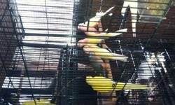I have 2 rosy males bourke possible split rubino parakeets. Asking $90 each.Pete 714-399-5518