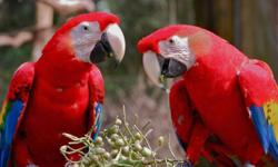 COME VISIT US AT THE SOUTHEAST EXOTIC BIRD FAIR ON MARCH 7TH & 8TH AT THE GA STATE FARMERS MARKET EXHIBIT HALL #29. 16 FOREST PKWY, FOREST PARK, GA SHOW HOURS SAT & SUN 9AM -4PM. ADMISSION IS $3.00 CHILDREN 16 & UNDER ARE FREE! THERE WILL BE EXOTIC BIRDS