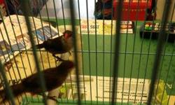 Hi I have a pair of finches meal and female ready to breed asking $75 with the cage,call me @ 619-997-52 93. Nicolas hablo español también This ad was posted with the eBay Classifieds mobile app.