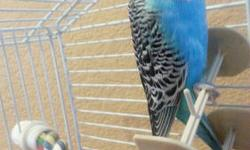 Hello we had an ok season with scarlet parakeets we will have some available for sale in a month or so when we set up our new pairs .....please if you like to reserve some lets us know ...we have blues(equa,turquise,and few w/c) we could set up young