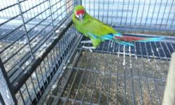 Tamed talking scarlet Macaw. Gorgeous larger then usual bird. Stays in stays in the house. likes dogs and kids. serious inquiries only. text or email for pictures.