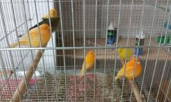 I am selling all my birds