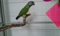 """Two pairs of Senegal breeders.. (All have certificates of DNA sexing.) I have not given them boxes so can only tell you they came from a breeder in the Chicago area as """"proven."""" Life changes has me needing to part with my birds and desire to raise them."""