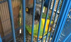 4 years old, perfect feathers, very smart bird. 9417065072 This ad was posted with the eBay Classifieds mobile app.