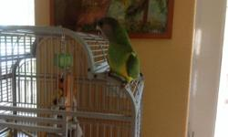Senegal female semi tame talk and wistle, perfect healt and condition. Please call if you are interesting