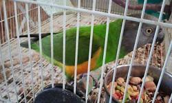 Breeding pair of Senegals parrots.I got this pair in a deal with some other breeding birds but I do not breed Senegals parrots so would like to sell them.Asking $750 for the birds only. Big breeding cage / not shown / available for aditional fee. Phone /