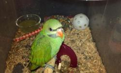 very sweet sengal parrot love men but will let female be with it,does not if it is a male or female I will let the cage go,too,I am asking $200.for the parrot but will take best offer,please call thanks 727-348-8964