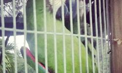 macaw foe sale. says HEY! good for breeding. prices negotiable