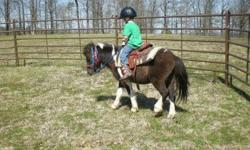 Cute 4 year old paint pony for sale. He can be ridden with just a halter and lead rope but steers better with a bit. My 5 year old (who is a complete beginner) did quite well on him. This little horse will make some child a great horse. He is super easy