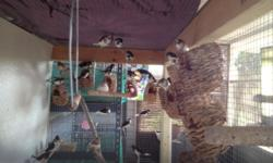 Beautiful, well cared for Society and Zebra Finches. Adults and youngsters. Must rehome. $7.50 per bird. Two Breeder Cages available, like new $30.00 each.